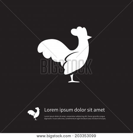 Hen Vector Element Can Be Used For Cock, Rooster, Bird Design Concept.  Isolated Cockerel Icon.