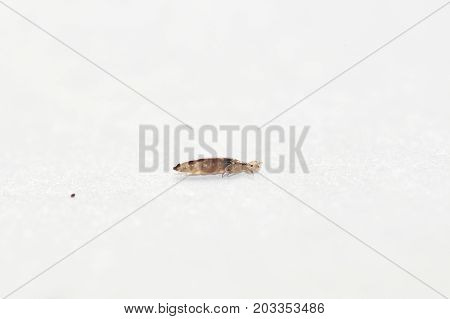 The Lice And Her Turd On A White Paper Background