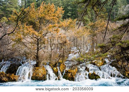 The rapidly moving creek in the forest. The flow of water in the autumn time among the trees. The waterfall by the rocks