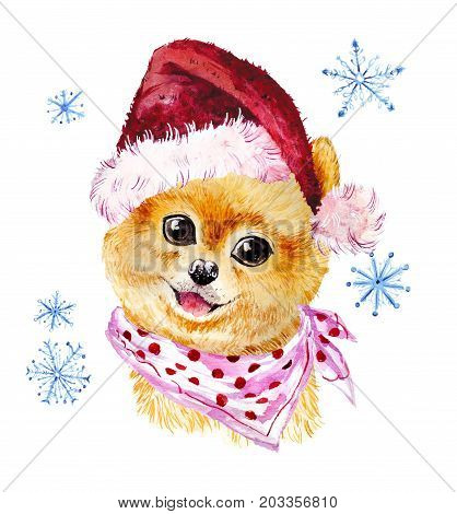 Watercolor artistic xmas dog in santa hat portrait isolated on white background. Cute pet animal head hand drawn. Pomeranian puppy. New Year symbol christmas card xmas emblem.