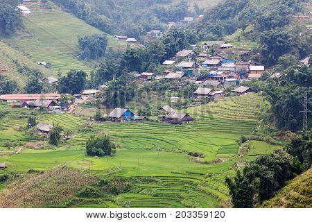 terraced green rice fields around Cat Cat village, Sa Pa, Vietnam