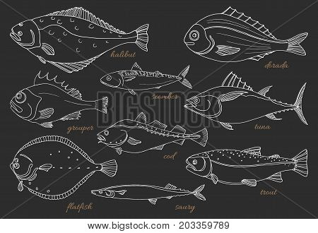 Set of sea fish on black background. Perch cod mackerel flounder saira tuna dorado halibut trout. Vector doodle. Seafood sketch. Illustration isolated and grouped for easy editing.