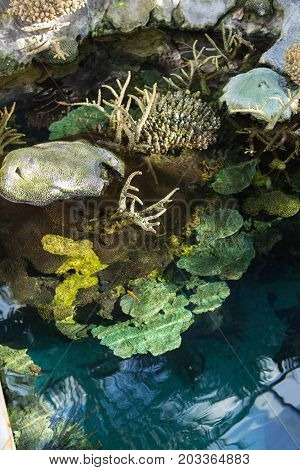 Aquatic Plants And Bubble-tip Anemone Inside Little Marsh