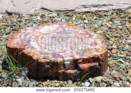Arizona's Petrified forest / painted desert national parks are lined with petrified wood and colorful sands