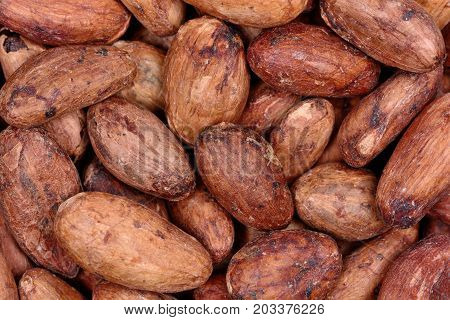 Many cacao beans of background close up