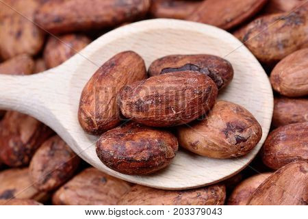 Wooden spoon with cacao beans close up