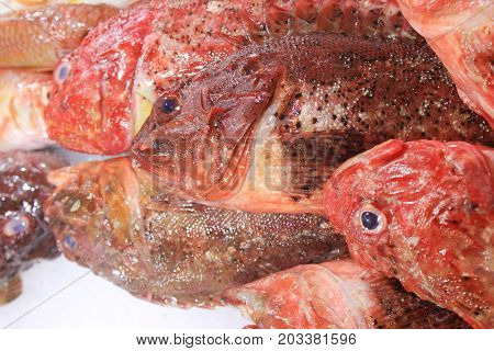 Fresh redfish at local seafood market counter. Fish - healthy meal option, contains many vitamins and minerals, important source of protein and other nutrients. Raw fish on ice background close up.
