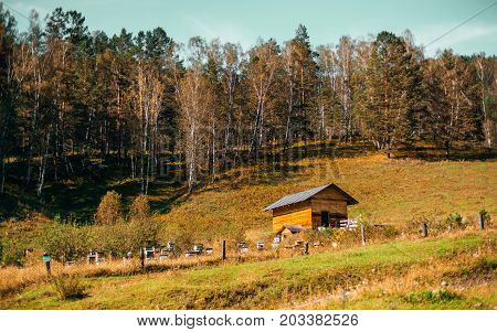 Beautiful autumn landscape: small wooden lodge with hill in background overgrown with dry native grasses and mixed forest; small beehives behind fencing Altai mountains Chemal district Russia