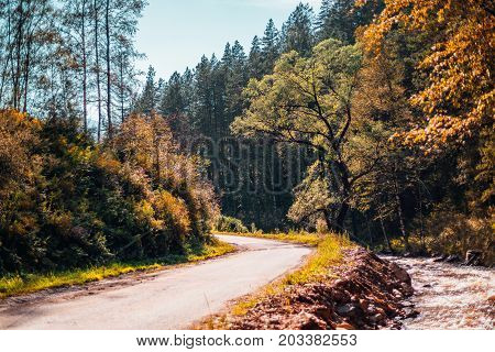 Autumn landscape: dirt road making bend after the hill overgrown with native grasses bushes and birch trees small brook on the right with stony banks pine trees in background Altai Russia