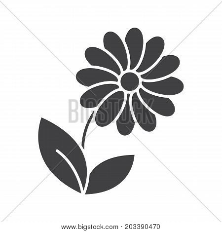 Camomile glyph icon. Silhouette symbol. Flower. Negative space. Vector isolated illustration