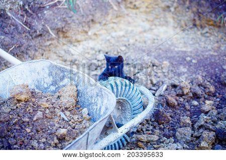 tiny black kitty playing with garden wheelbarrow