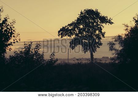 silhouette of a big tree in the early morning