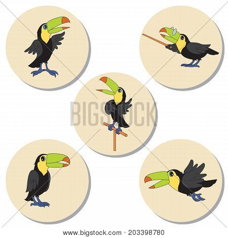 Set of character illustrations. Cute birds toucan. Cartoon personages isolated on round background with shadow.