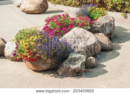 Beautifu composition of flowers and stones in garden
