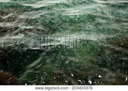 Jellyfish In The Sea, Crowded Sea Jellyfish