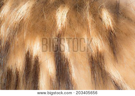Texture Of Faux Fur, Imetiruyuschaya Fur Animals