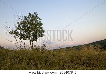 Picturesque tree on a glade, an evening landscape, a decline, the nature