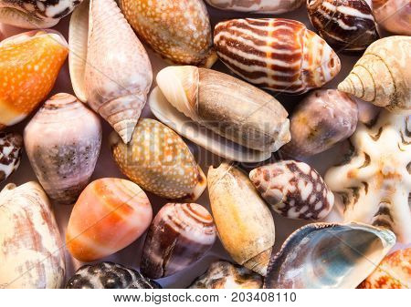 Hot orange sea shells background. Small shells closeup. Sea shell banner template. Tropical island seashore finding. Exotic island beach texture. Warm sea nature detail. Marine shell cover top view.