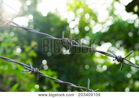 Barbed wire on sunny greenery background. Barbed wire under sunshine. Water drops on sharp wire knots. Garden fence protecting property. Black wire border. Nature boundaries and sunny freedom concept