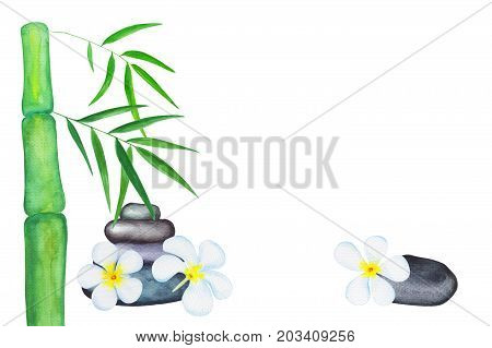 Green bamboo leaves and frangipani flowers watercolor illustration. Handdrawn spa background. Chinese banner template with text place. Bamboo leaf border. Green tropical leaf. Japanese style backdrop