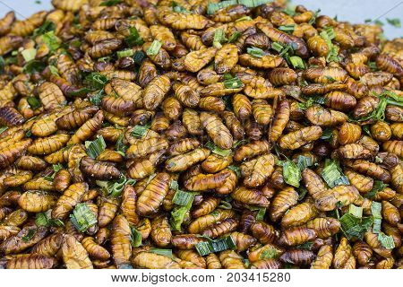 Edible roasted and spiced meal worms Bugs fried on street food in Thailand. Fried larva is the food on the Thai market closeup.