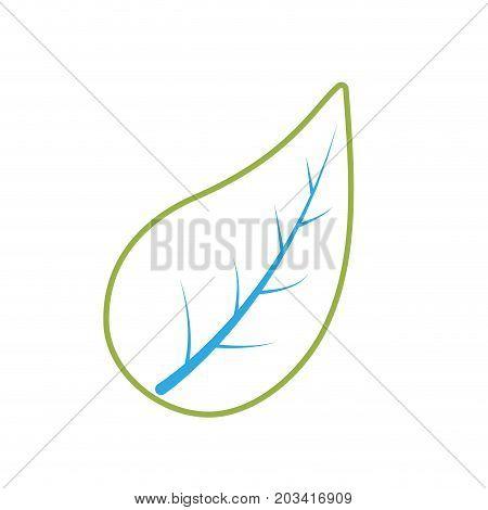 line natural leaf of plant and exotic botany vector illustration