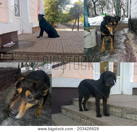 Homeless city dogs with black shcherchy in different angles