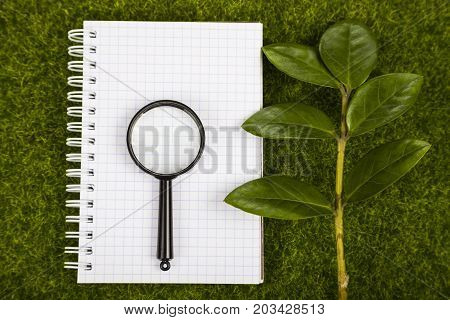 Notebook,, Magnifier And Green Leaves