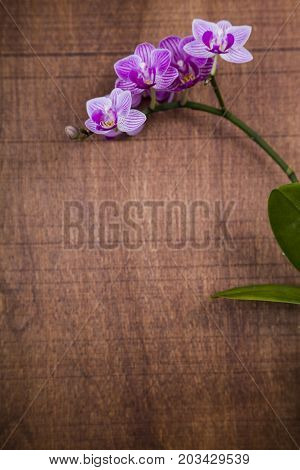 Orchid (Phalaenopsis) on a wooden table top view. Beautiful background for your design.