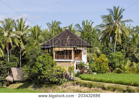 Tropical house with a tiled roof among rice fields. Island Bali Ubud Indonesia