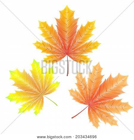 Embroidered autumn maple leaves on white background. Vector illustration