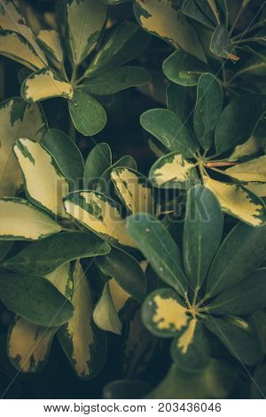 Green leaves texture and background. Green organic background. Close up view of green leaves. Abstract texture and background for designers.
