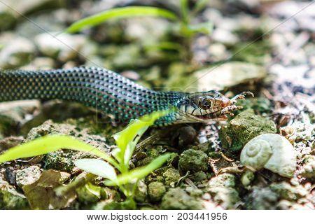 Snake Eating A Frog, Cobà, Quintana Roo, Mexico.