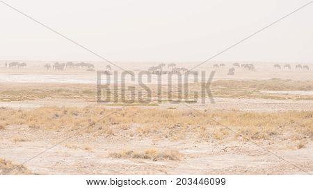 Herd Of Antelopes Grazing In The Desert Pan. Sand Storm And Fog. Wildlife Safari In The Etosha Natio