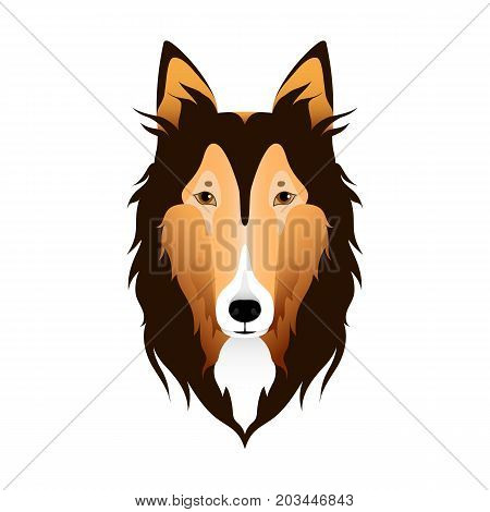 Isolated colorful head and face of scottish shepherd collie sheltie sheepdog on white background. Line color flat cartoon breed dog portrait