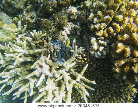Diverse shapes of coral reef. Tropical seashore inhabitants underwater photo. Coral reef animal. Warm sea nature. Colorful sea fish and corals. Undersea view of marine life. Coral reef landscape