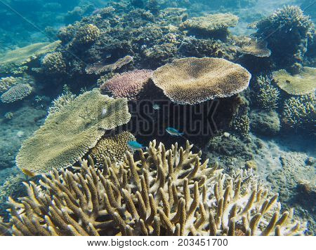 Neon fish colony in coral reef. Tropical seashore inhabitants underwater photo. Coral reef animal. Warm sea nature. Colorful sea fish and corals. Undersea view of marine life. Coral reef landscape