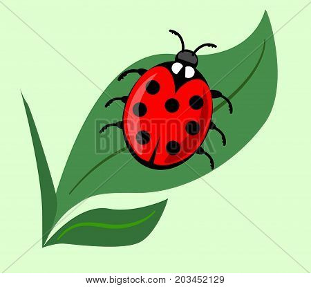 Cute ladybug on green leaf isolated onlight green background. Vector ladybird illustration, beautiful red beetle with seven dots on his wing case. Vector EPS 10