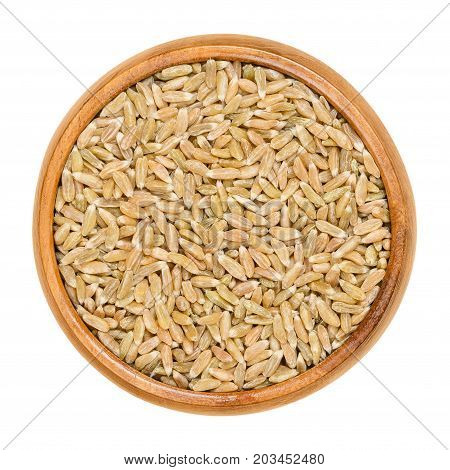 Whole grain green spelt in wooden bowl. Husked, dried half ripe spelt. Green kernel. Seeds of Triticum spelta, also dinkel wheat or hulled wheat. Macro food photo close up from above over white.