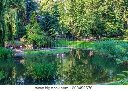 WARSAW, POLAND - JUNE, 2015: Beautiful pond with several Flamingos in Warsaw Zoo