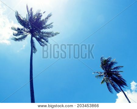 Tall palm tree silhouette on blue sky. Palm tree crown with green leaf on sunny sky background. Coco palm tree view from ground. Summer travel banner. Exotic island nature photo. Cinematic effect