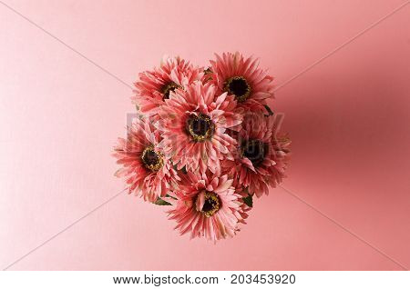 Pink Gerbera daisy flower on pink background,decoration flowers
