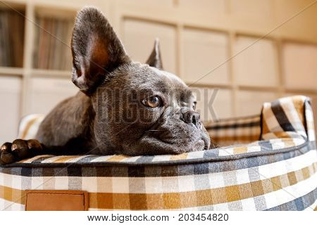Dog Resting On Bed At Home
