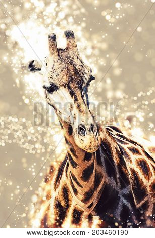 Rothschild's giraffe with shimmering background. Beauty in african nature.