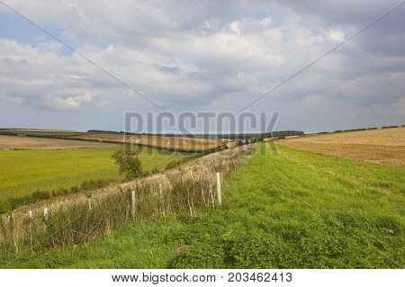 Arable Fields And Plantation