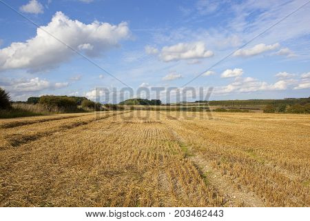Golden Harvested Fields