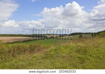Country Landscape And Wildflowers