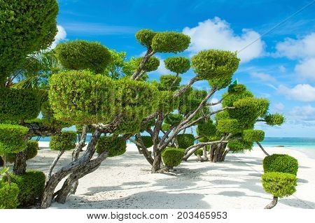 Beautiful tropical garden on the sandy shores of the Indian Ocean