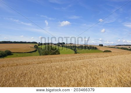 Wheat Field And Scenery