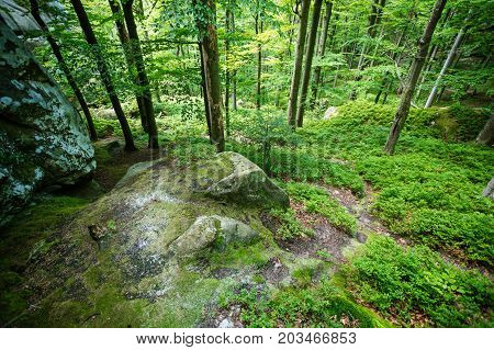 Beautiful green forest and boulders on foreground